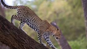 Amboseli Safaris- Singles Retreats