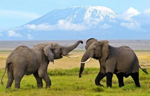Amboseli Team Building Packages