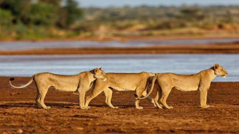 Samburu Safaris