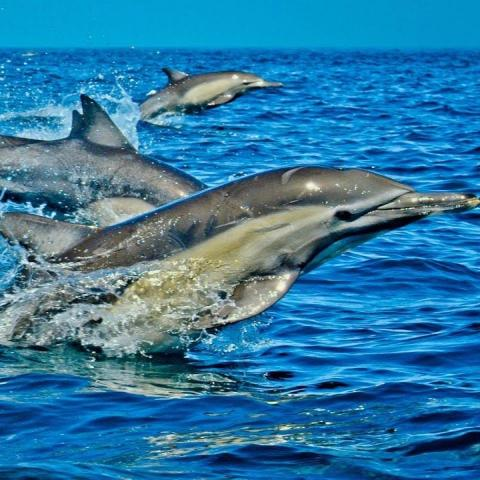 S05- Day Tours from Mombasa