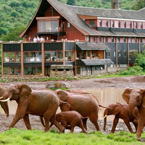 The Abadares Safaris