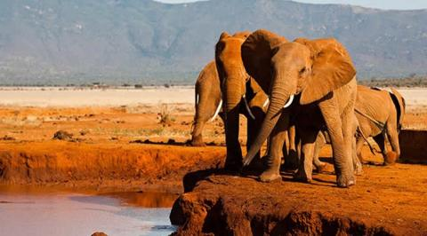 Tsavo / Voi Team Building Packages